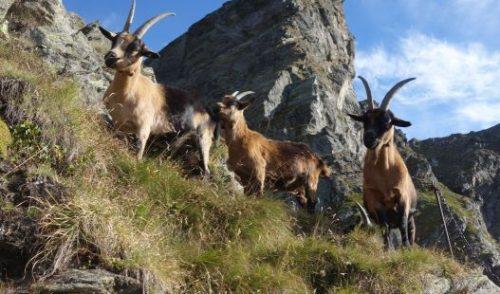 Artikelbild zu Artikel Bergtour für Nordlichter – von der Idee bis zum Gipfelglück